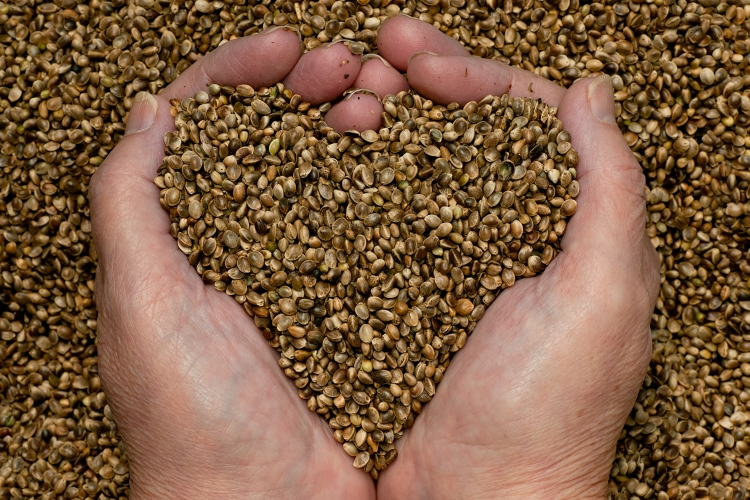 These are hemp seeds. No you can't smoke them!